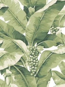 Paradisio Palm